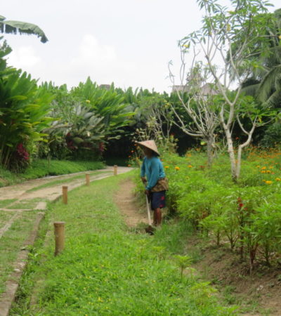IMG 0580 1024x768 400x450 - Bali
