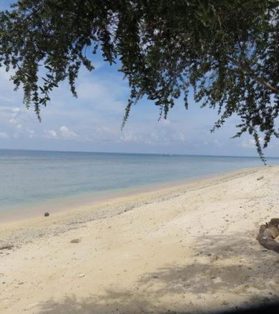 IMG 0723 1024x768 400x450 - Bali