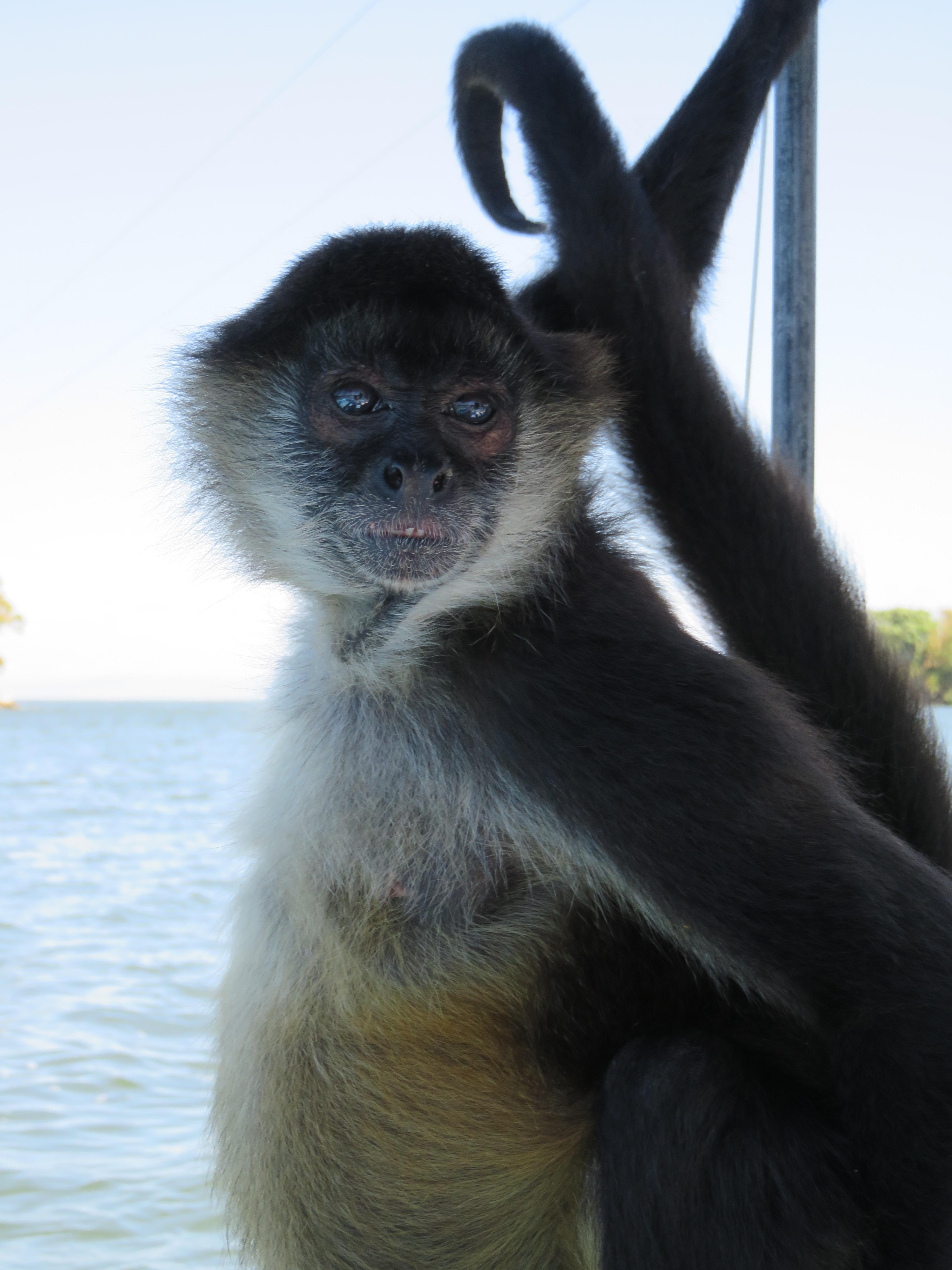 IMG 1596 - Nicaragua