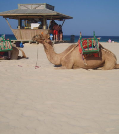 15 au 29 août 09 Fuerté Lanzarote 044 1024x768 400x450 - Fuerteventura