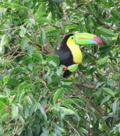 IMG 1400.JPG 1024x768 400x450 - Costa Rica