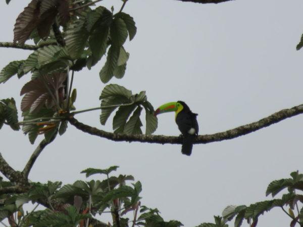 IMG 1405.JPG 1024x768 600x450 - Costa Rica