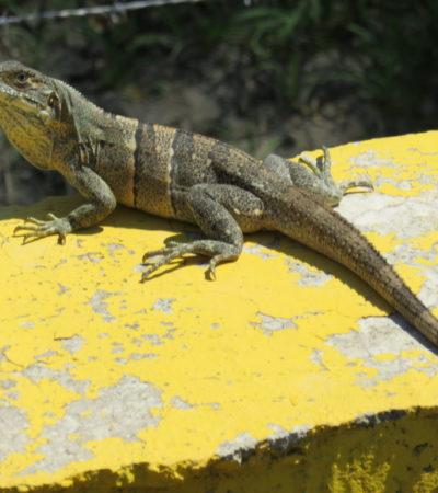 IMG 1655.JPG 1024x768 400x450 - Costa Rica
