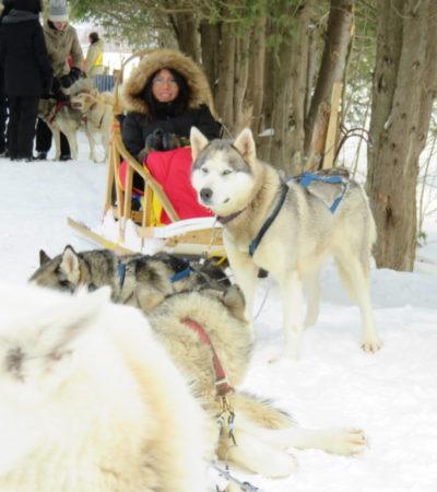 chien de traineau montreal 1024x768 400x450 - Québec