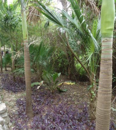 DSC00305 768x1024 400x450 - Cancun