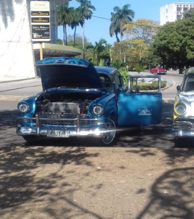 20190302 145506 768x1024 400x450 - Havane