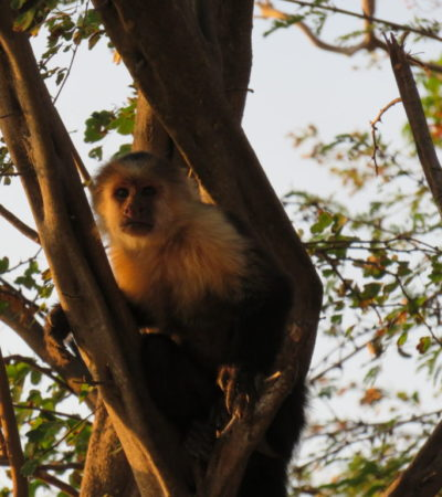 Macque Costa Rica 1024x768 400x450 - Costa Rica