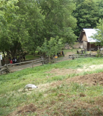 Ferme du Parc Oméga VoyagesPIA 1024x576 400x450 - Châteauguay