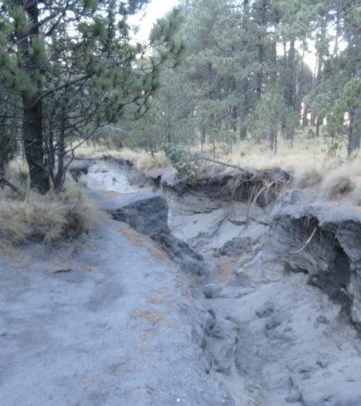 Forêt ascension volcan La Malinche au Mexique VoyagesPIA 1024x768 400x450 - La Malinche