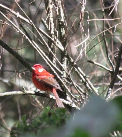 Oiseau de la Malinche Tlaxcala du Mexique VoyagesPIA 1024x768 400x450 - La Malinche