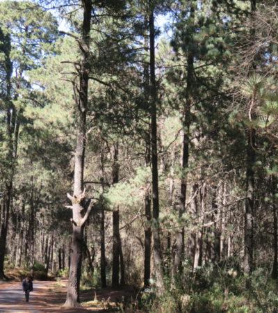 Réserve naturelle La Malinche au Mexique VoyagesPIA 1024x768 400x450 - La Malinche