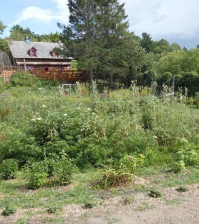 potager de la ferme d antan du parc oméga voyagespia 1024x576 400x450 - Châteauguay