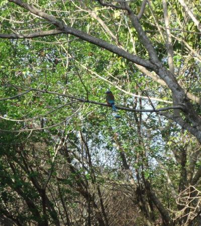 Colibri à Cancun au Mexique VoyagesPIA 1024x768 400x450 - Cancun
