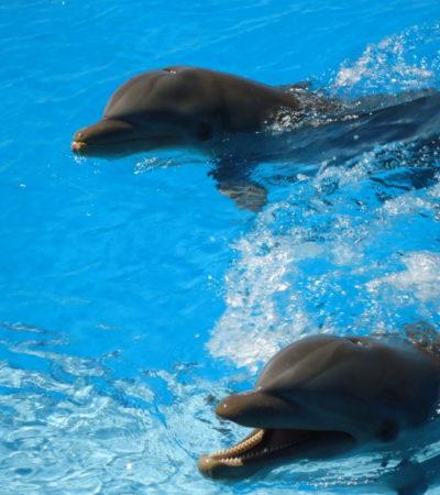 Dauphins de lhôtel Sirenis Le Mirage à Playa Del Carmen au Mexique VoyagesPIA 1024x768 400x450 - Playa Del Carmen