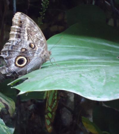 Papillon de Cancun au Mexique VoyagesPIA 1024x768 400x450 - Cancun