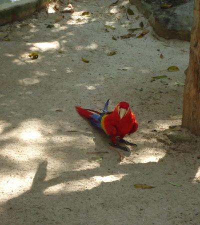 Parc Xcaret Perroquet à Playa Del Carmen VoyagesPIA 1024x768 400x450 - Playa Del Carmen