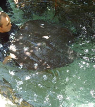 Parc Xcaret Raie à Playa Del Carmen au Mexique VoyagesPIA 1024x768 400x450 - Playa Del Carmen