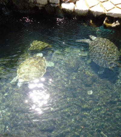 Parc Xcaret Tortues à Playa Del Carmen au Mexique VoyagesPIA 1024x768 400x450 - Playa Del Carmen