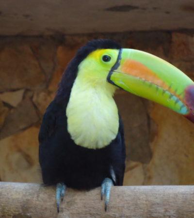 Parc Xcaret Toucan à Playa Del Carmen au Mexique voyagesPIA 1024x768 400x450 - Playa Del Carmen