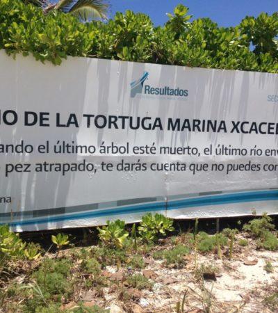 Plage de Tortues à Cancun au Mexique VoyagesPIA 1024x768 400x450 - Cancun