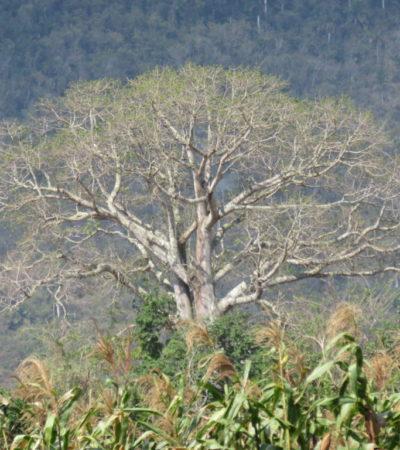 Arbre et nature Vinales Cuba VoyagesPIA 1024x768 400x450 - Viñales