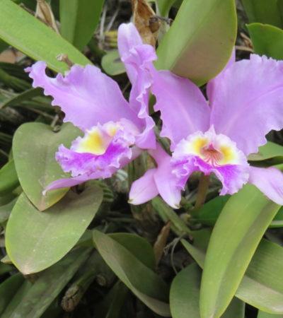 Jardin botanique de Vinales VoyagesPIA 1024x768 400x450 - Viñales
