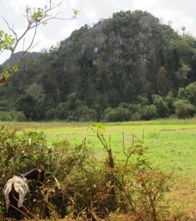 Montagnes et nature à Vinales Cuba VoyagesPIA 1024x768 400x450 - Viñales