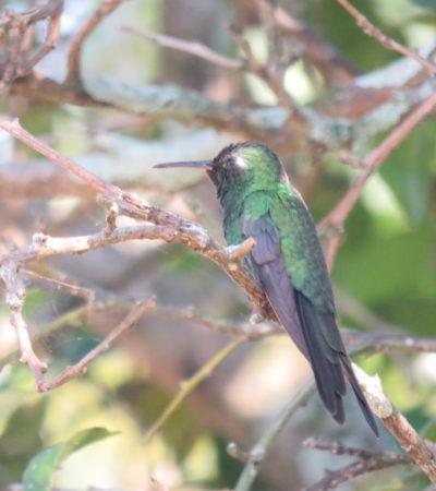 Oiseau cubain à Vinales VoyagesPIA 1024x768 400x450 - Viñales